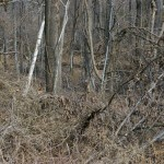 Can you spot the Deer?